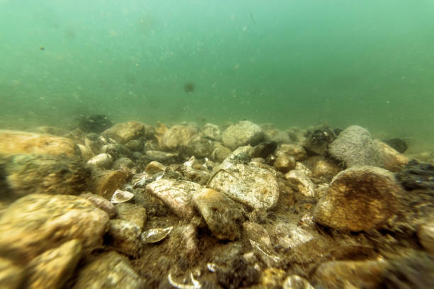 Underwater Pebbles Rivers and Lakes Freshwater, Pebbles on Riverbed stock photo