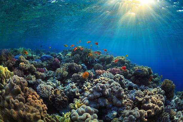 corallina reef - barriera corallina foto e immagini stock