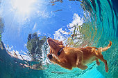 Underwater photo of dog swimming in outdoor pool