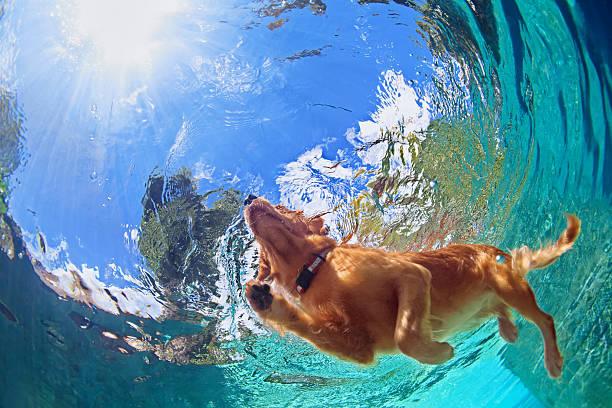 Underwater photo of dog swimming in outdoor pool picture id518322202?b=1&k=6&m=518322202&s=612x612&w=0&h=s58takourik5pli ysjuclfrgmhf4vjbie8z jytqkc=