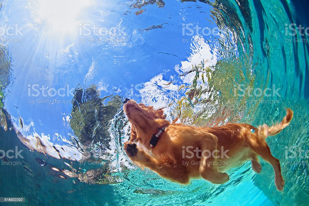 Underwater photo of dog swimming in outdoor pool stock photo
