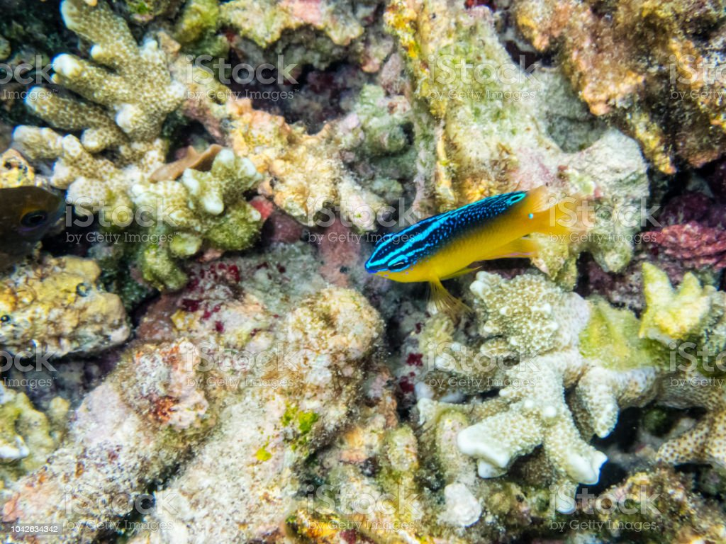 Underwater photos of small sea fish stock photo