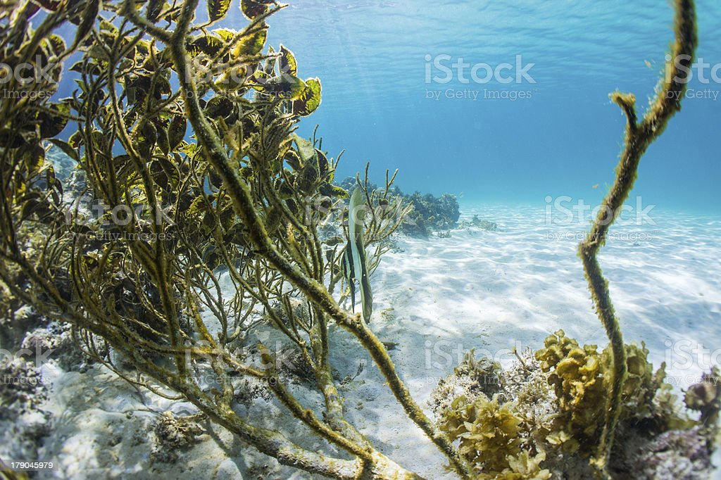 underwater royalty-free stock photo