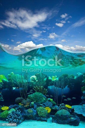 Half underwater shoot