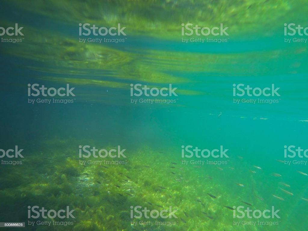 underwater royalty-free stock photo