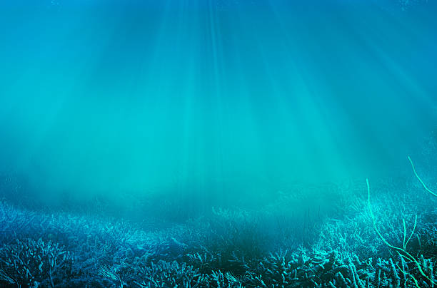 underwater underwater landscape undersea stock pictures, royalty-free photos & images