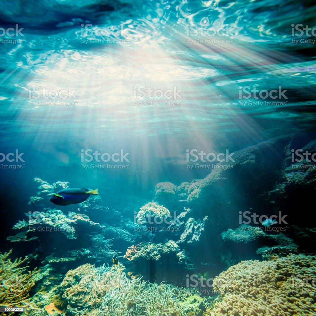 underwater zbiór zdjęć royalty-free