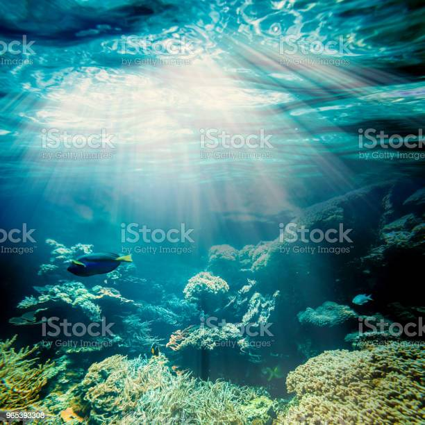 Foto de Debaixo Dágua e mais fotos de stock de Areia