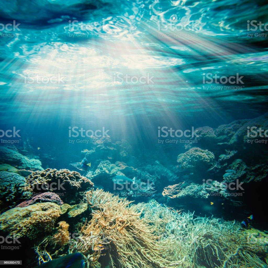 Unterwasser - Lizenzfrei Blau Stock-Foto