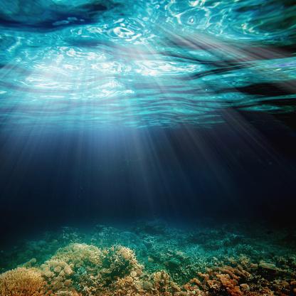 바닷속이 0명에 대한 스톡 사진 및 기타 이미지