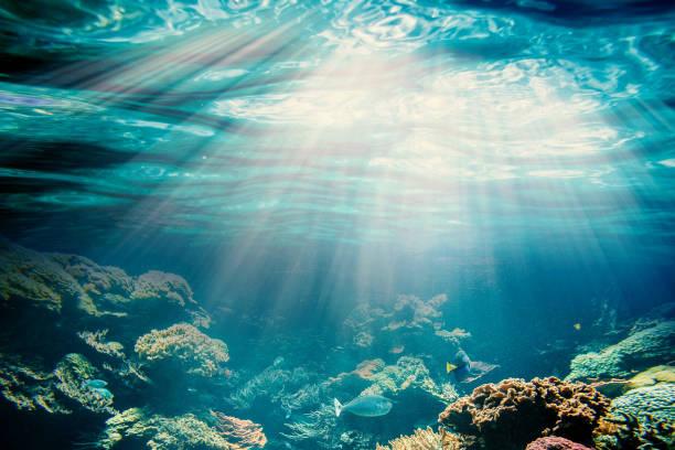 바닷속이 - 깊은 뉴스 사진 이미지