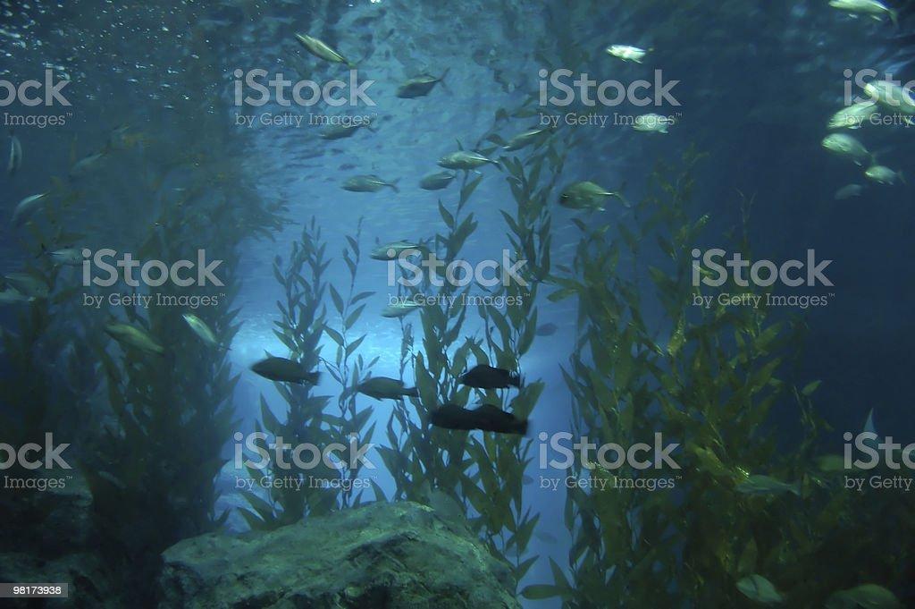 Underwater #2 royalty-free stock photo