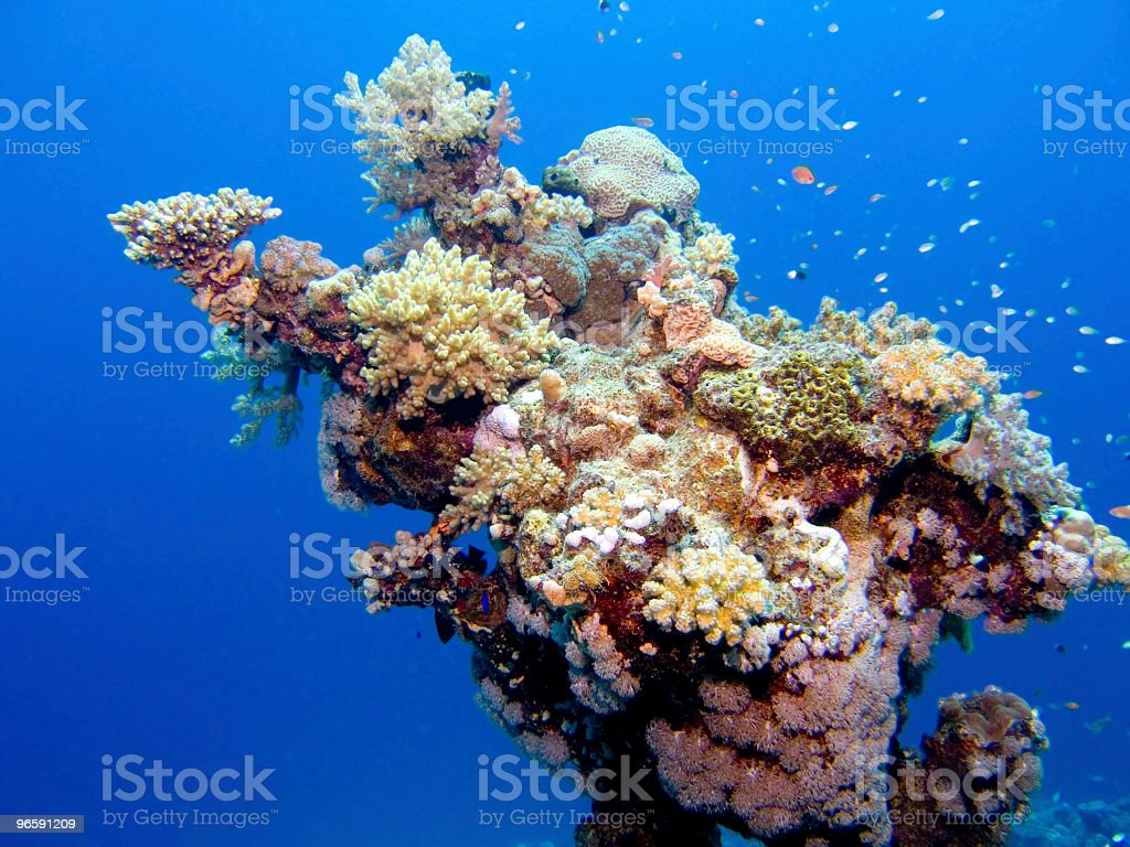 Underwater picture of thick coral - Royalty-free Afrika Stockfoto
