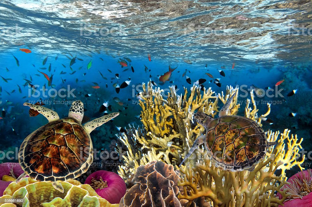 Underwater picture with great variety of fish stock photo