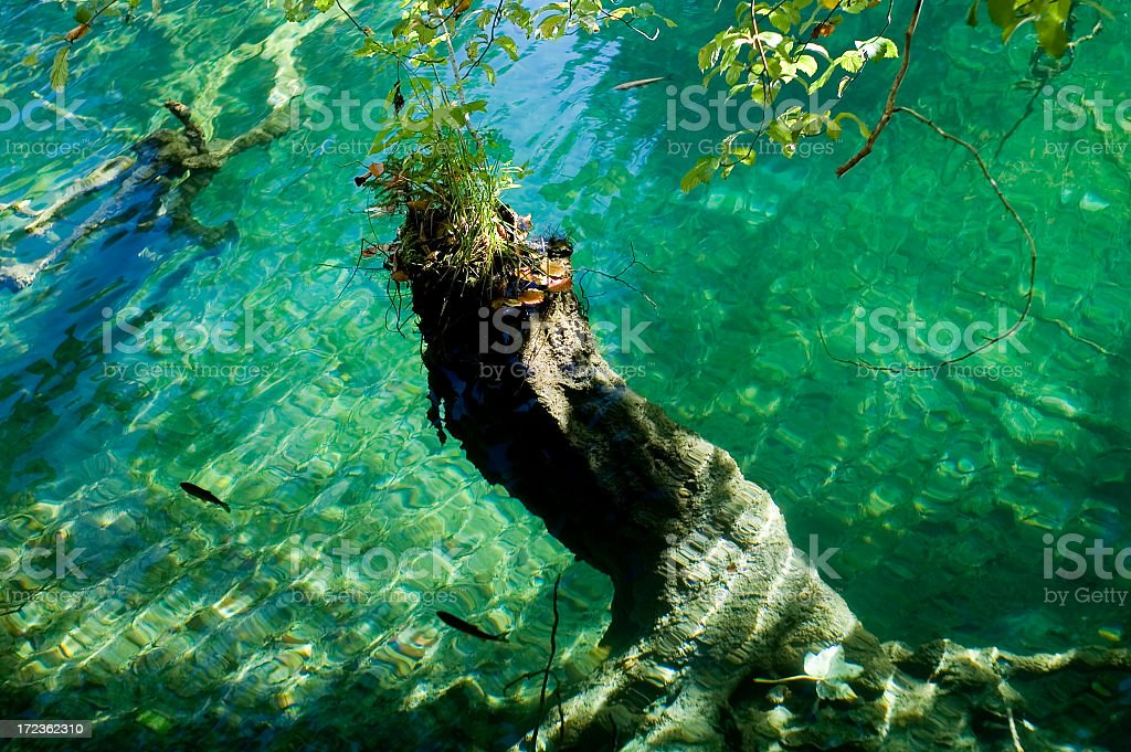 Underwater, Plitvice lakes, Croatia, Europe. royalty-free stock photo
