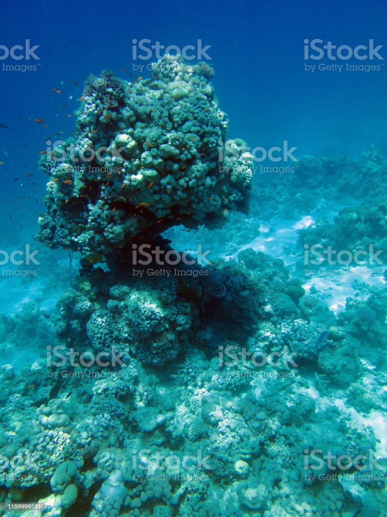 Underwater Red sea, blue clean water, yellow coral and fishes