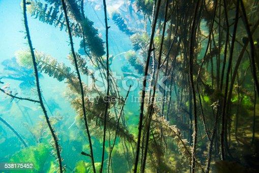 istock Underwater river landscape 538175452