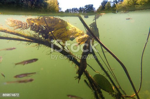 istock Underwater river landscape with algae, fry and water surface 859874672