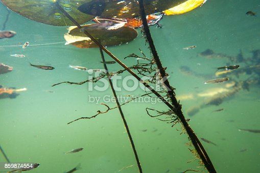 istock Underwater river landscape with algae 859874554