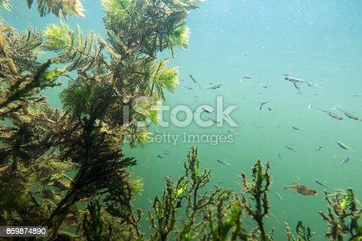 istock Underwater river landscape with algae 859874890
