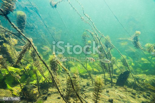 istock Underwater river landscape with little fish 538175482