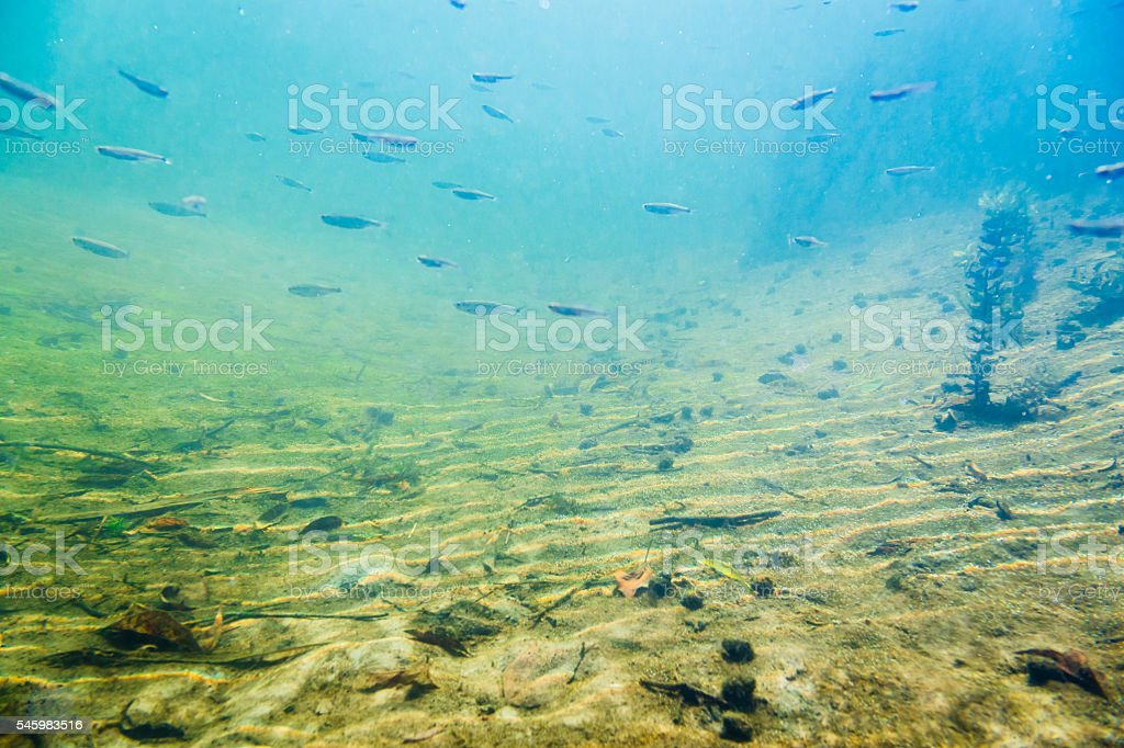 Underwater river landscape with little fish stock photo