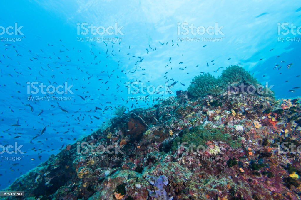Underwater Scape of sea anemone and coral reef 免版稅 stock photo