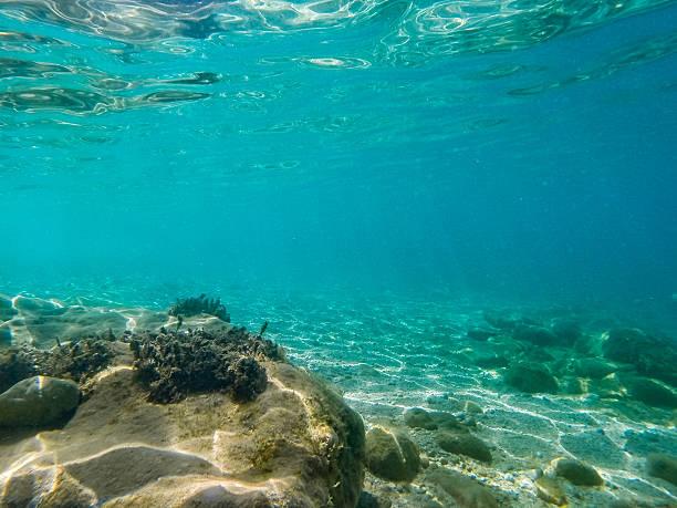underwater scene 8 - ocean floor stock photos and pictures