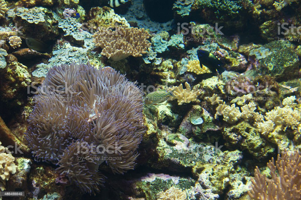 Underwater scene of bright colored tropical fish stock photo