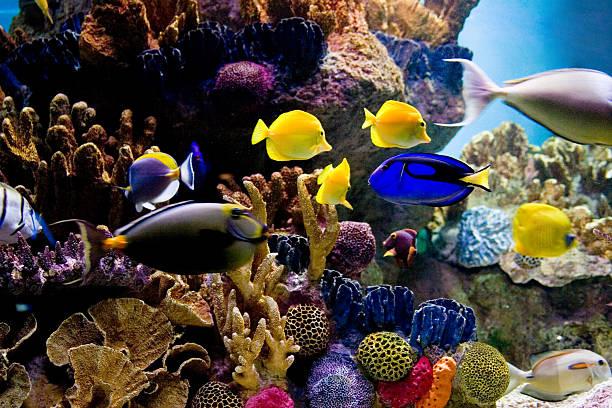 podwodna scena z jasne kolorowe ryby tropikalne - tropikalna ryba zdjęcia i obrazy z banku zdjęć