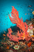 Underwater scene of colorful coral reef formation in clear blue water surrounded by small fish