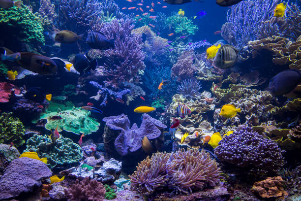 underwater scene - reef stock pictures, royalty-free photos & images
