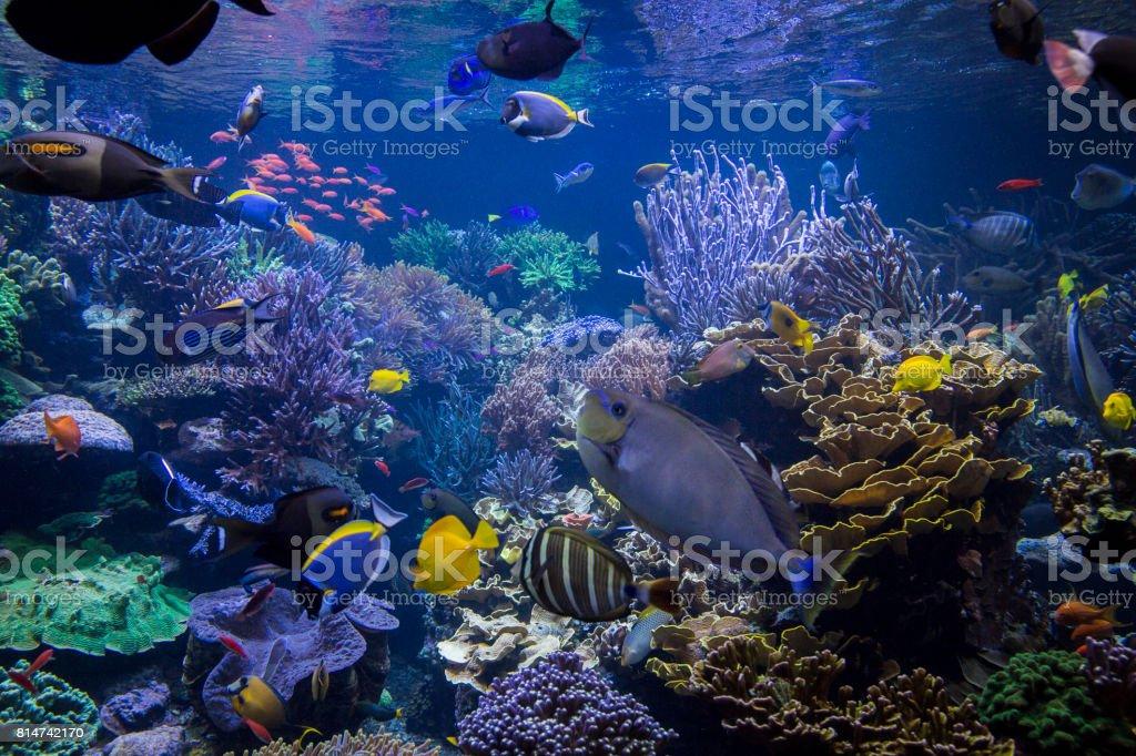 Escena debajo del agua - foto de stock