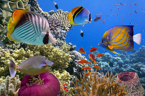 Underwater scene, showing different colorful fishes swimming stock photo
