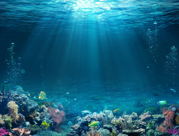 underwater scene - tropical seabed with reef and sunshine. - abaixo imagens e fotografias de stock