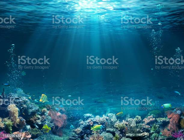 Photo of Underwater Scene - Tropical Seabed With Reef And Sunshine.