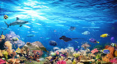 Exotic Fishes In Scenic Seascape