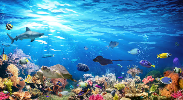 Underwater Scene With Coral Reef And Exotic Fishes Exotic Fishes In Scenic Seascape undersea stock pictures, royalty-free photos & images