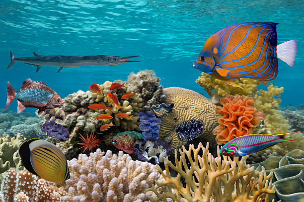 Underwater scene with coral reef and fish photographed in shallo stock photo
