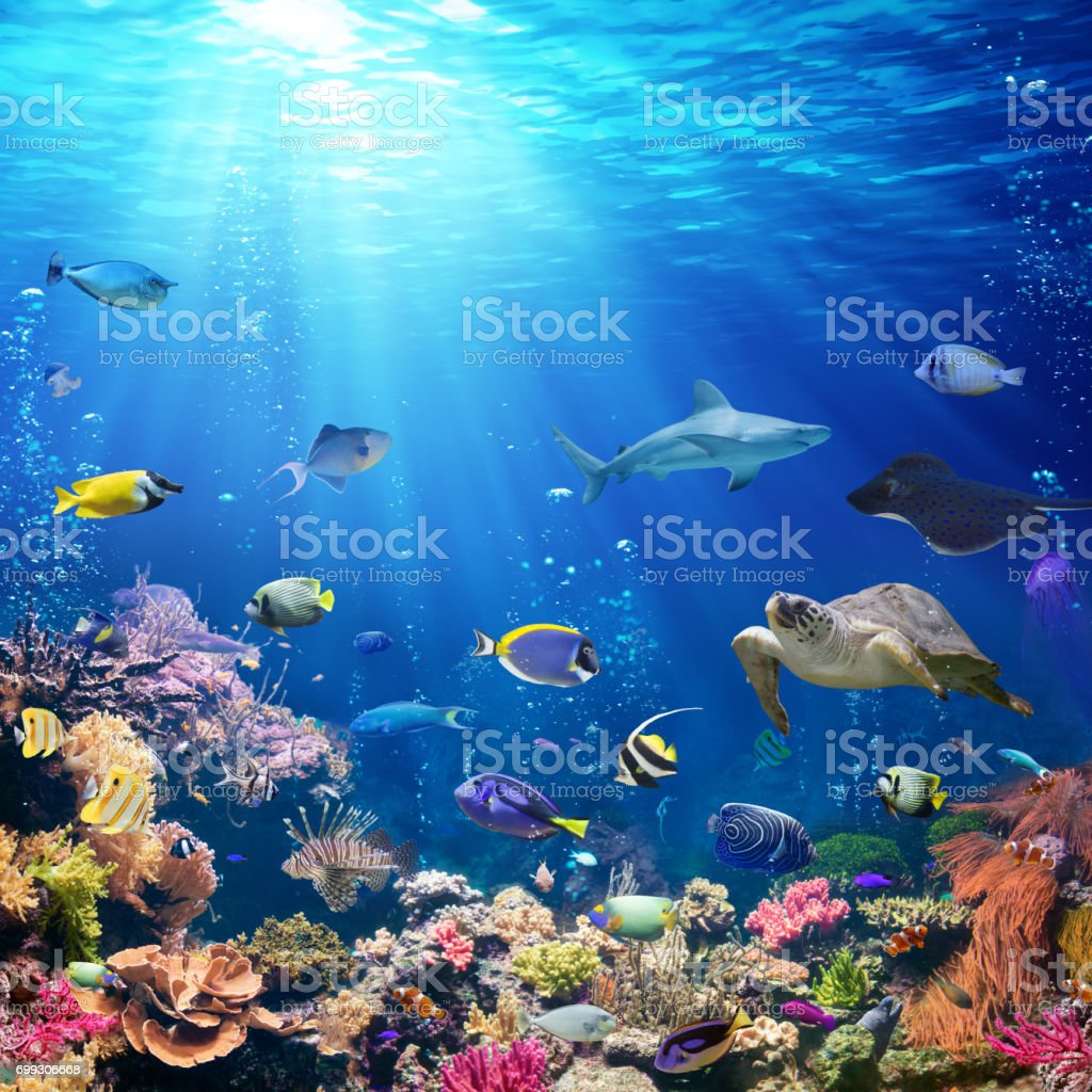 Underwater scene with coral reef and tropical fish stock for Reef tropical fish