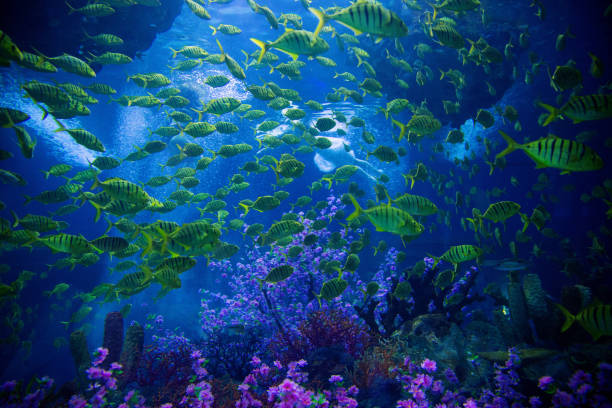 underwater scene with reef and tropical fish - great barrier reef stock pictures, royalty-free photos & images