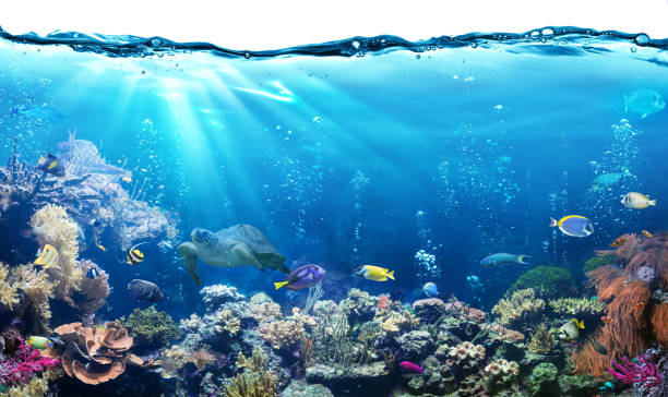 Underwater scene with reef and tropical fish picture id671796532?b=1&k=6&m=671796532&s=612x612&w=0&h=uvcoucfad2rpmahdfhx8qzfztxebi2 e5kl5cjbljac=