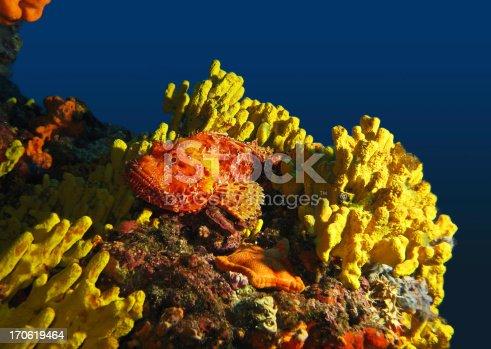istock Underwater scenery 170619464