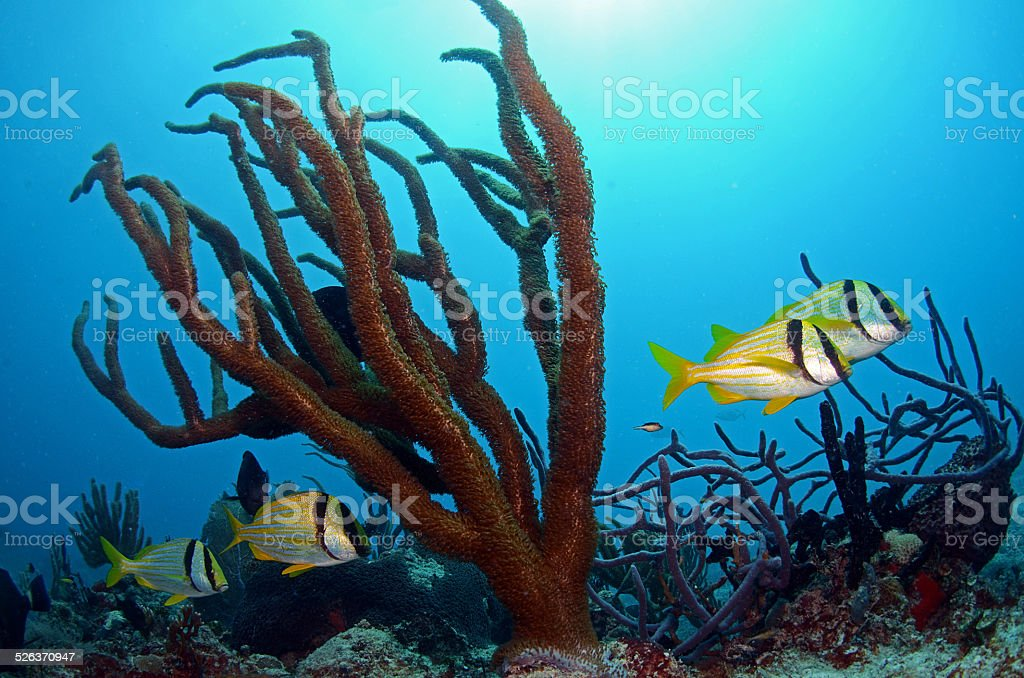 Underwater Scenery stock photo