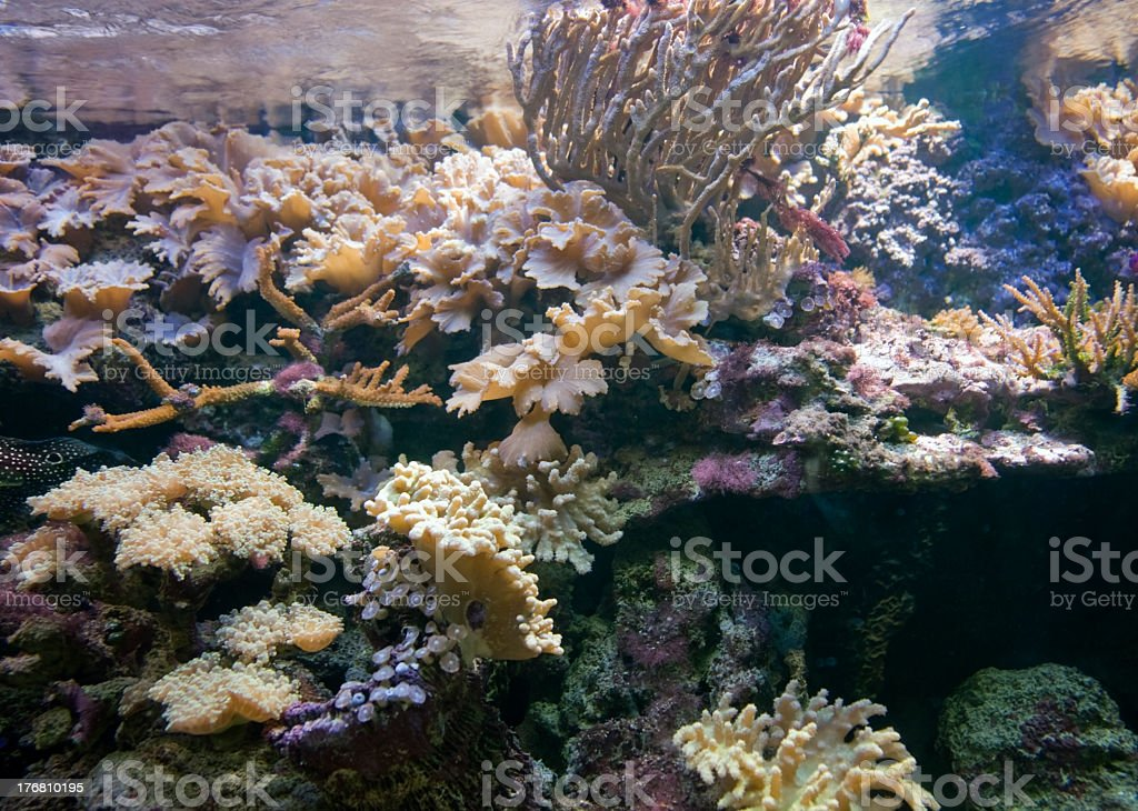 underwater scenery with corals stock photo