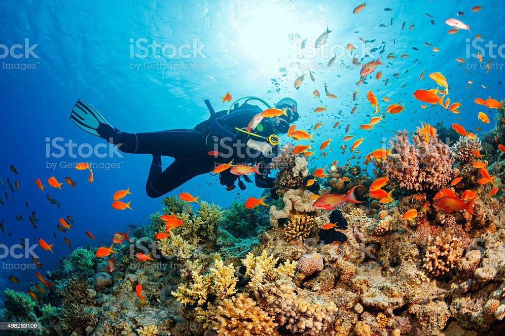 水中でスキューバダイバーとのコーラルリーフ海洋生物をお楽しみください。 ロイヤリティフリーストックフォト