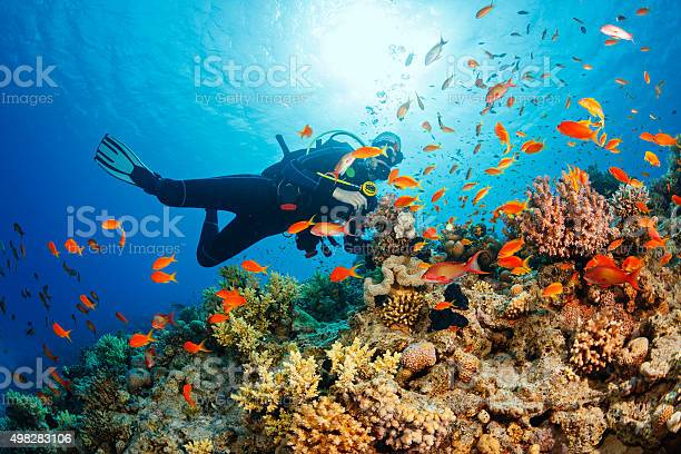 Scuba diving. Beautiful sea life. Underwater scene with young women, scuba diver, explore and enjoy at coral reef. School of red sea fish (scalefin anthias).
