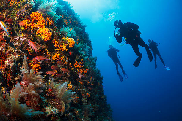 Underwater  Scuba divers enjoy  Explore  reef   Sea life  Sea sponge Scuba diving. Beautiful sea life, live sea orange gorgonian. Underwater scene with group of scuba divers, explore and enjoy at sea sponge. Scuba diver point of view. underwater diving stock pictures, royalty-free photos & images