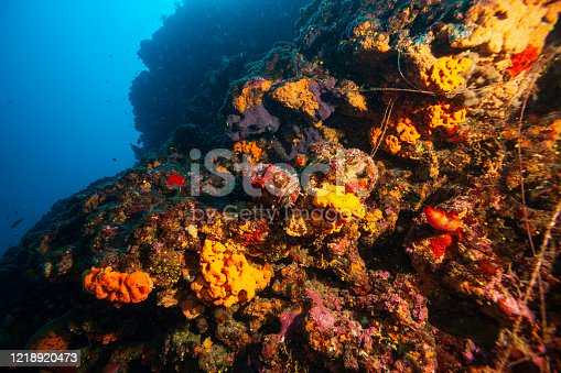 istock Underwater Sea life Coral reef, Sea sponge, fish. Scuba diver point of view. 1218920473