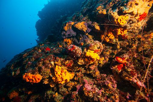 istock Underwater Sea life Coral reef, Sea sponge, fish. Scuba diver point of view. 1218920473
